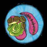 055-Kit de Beet hummus tartine